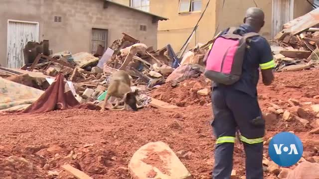 South Africa Police Dogs Search Cyclone Idai-Hit Areas In Zimbabwe