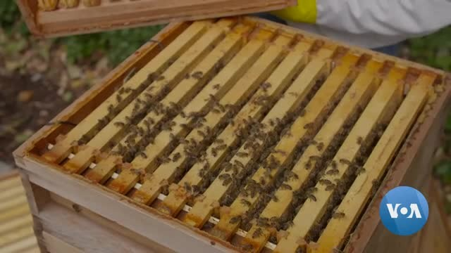 Plugged in Hives Providing Information on Bee Health