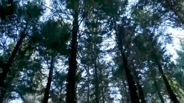 Scientists Tune In to Trees to Monitor Planet's Health