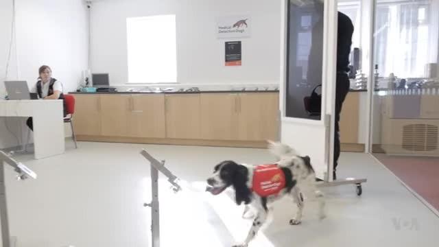 Disease Sniffing Dogs Could Help Stop the Spread of Malaria